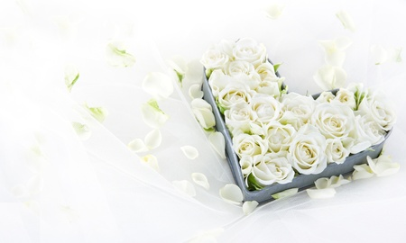 White wedding roses in an old vintage metal heart shaped tray on dreamy lace background with floral petals