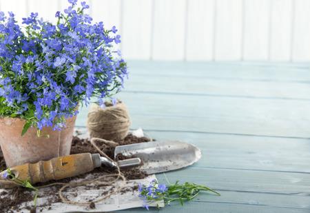 Photo pour Vintage garden tools and blue flowers in terracotta flower pots - concept for gardening - image libre de droit