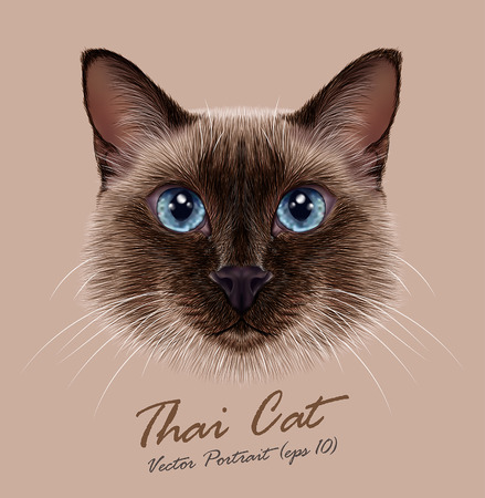 Illustration for Vector Illustrative Portrait of a Thai Cat. Cute seal point Traditional Siamese Cat. - Royalty Free Image