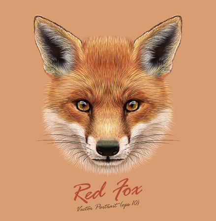 Illustrazione per Vector Illustrative Portrait of a Red Fox. The cute fluffy face of forest Fox. - Immagini Royalty Free