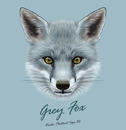 Illustration for Vector Illustrative portrait of Grey Fox. Cute face of Fox with silver color of coat. - Royalty Free Image