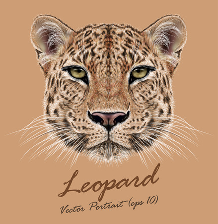 Ilustración de Vector Illustrative Portrait of Leopard. Cute face of African Leopard - Imagen libre de derechos