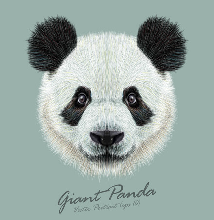 Photo pour Vector Illustrative portrait of Panda.Cute attractive face bears. - image libre de droit