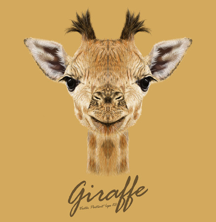 Photo pour Vector Illustrative portrait of Giraffe.Cute attractive face of young giraffe with horns. - image libre de droit