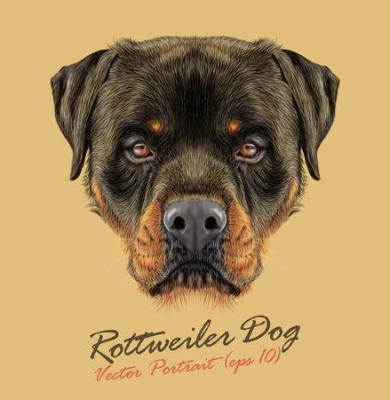 Vector Illustrative portrait of Rottweiler Dog. Bonny portrait of adult Domestic Dog.