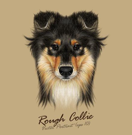 Illustration pour Vector Illustrative Portrait of Collie Dog. Cute Face of Mahogany Sable Rough Collie or Shetland Sheepdog Sheltie. - image libre de droit