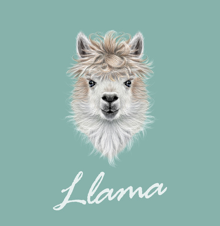 Illustration for Vector illustrated portrait of Llama or Alpaca on blue background. - Royalty Free Image