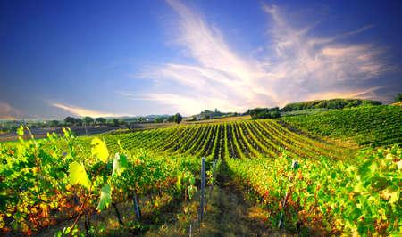 Foto de Fresh green grapevines disappear into the distant European sunset - Imagen libre de derechos