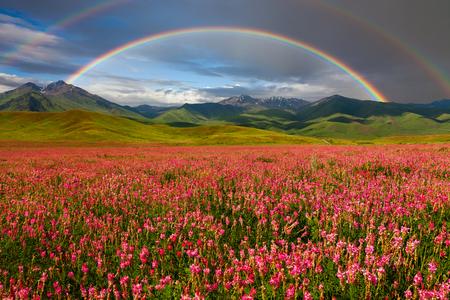 Foto de Double rainbow over blooming mountain valley - Imagen libre de derechos