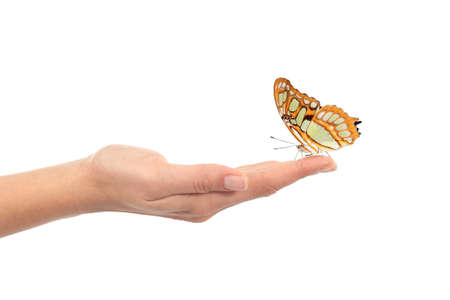 Photo for Beautiful butterfly on a woman hand isolated on a white background - Royalty Free Image