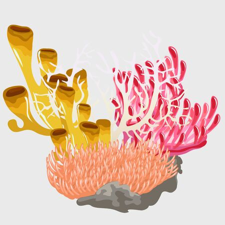 Bouquet of colorful corals, tropical scenery of underwater world