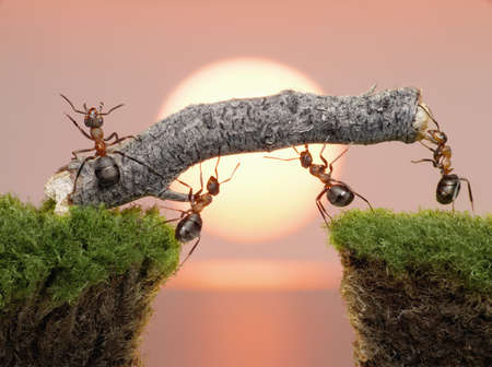Photo for team of ants constructing bridge over water on sunrise or sunset - Royalty Free Image