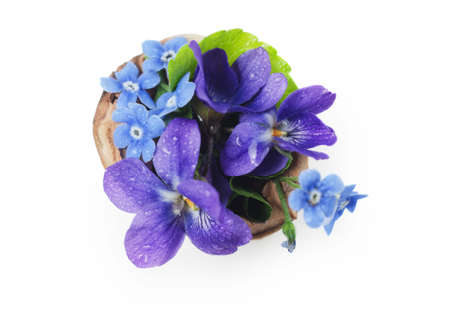 Photo for Floristic composition with violets and forget-me-not flowers in a nutshell against beautiful bokeh background. - Royalty Free Image