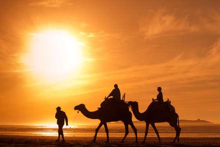 Photo pour silhouettes of camels at sunset - image libre de droit