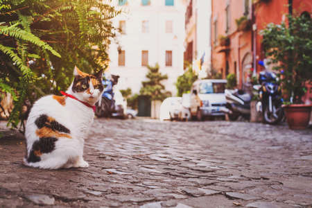 Photo pour cat sitting on the street near home in Italy - image libre de droit