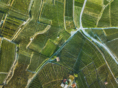 Foto de beautiful aerial landscape of wine yards, top view of grape plantation - Imagen libre de derechos