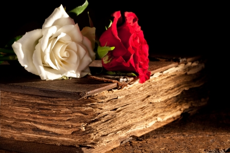 Photo pour Romantic roses lying on a medieval old book - image libre de droit