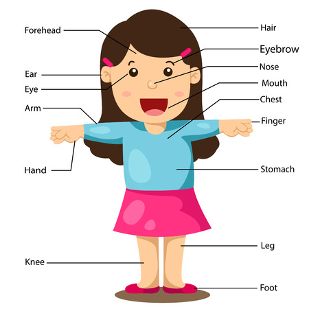 Illustration pour Illustration of Girl With Labeled Body Parts - image libre de droit