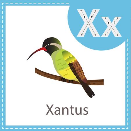 Ilustración de Illustrator of Xantus bird - Imagen libre de derechos