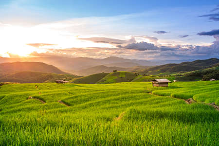 Foto de Beautiful sunset over the paddy fields in Pa Pong Pieng , Mae Chaem, Chiang Mai, Thailand. - Imagen libre de derechos