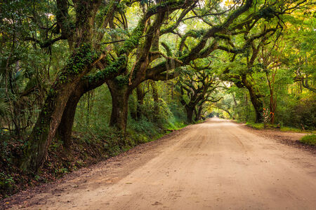 Oak trees along the dirt road to Botany Bay Plantation on Edisto Island, South Carolina.