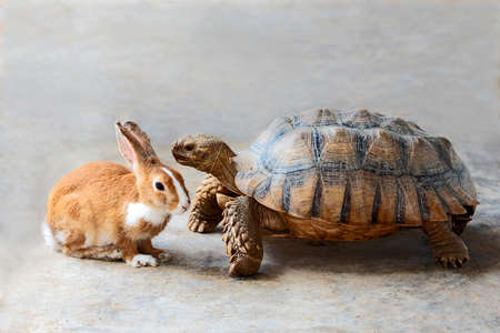 Photo for Rabbit and turtle are discussing the competition. - Royalty Free Image
