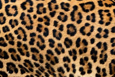 Photo pour Leopard fur texture (real fur) - image libre de droit