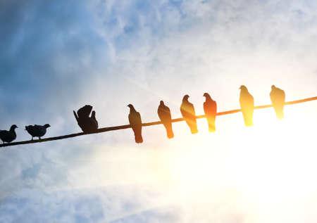 Photo pour pigeons on wire against solar sky - image libre de droit