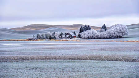 Photo for Farm house in rolling hills farmlands. Frozen crops and trees covered with frost in winter. Palouse. Southeast Washington. United States of America. - Royalty Free Image