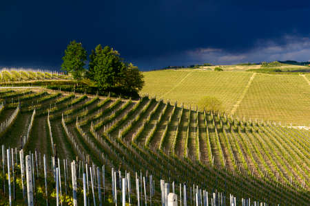 Foto de View of vineyards and Langa hills during a thunderstorm, suggestive contrast between dark skies and vineyards illuminated by the afternoon sun - Imagen libre de derechos