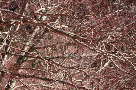 Photo for background of tree branches - Royalty Free Image