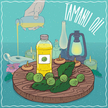 Illustration pour Plastic Bottle of Tamanu oil and fruits and leaves of Calophyllum plant. Hand filling ancient oil lamp. Natural vegetable oil used as fuel for oil lamp - image libre de droit
