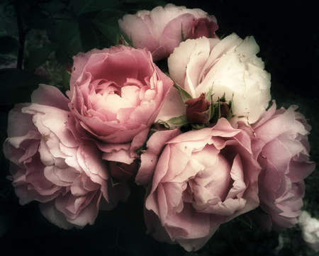 Photo pour Soft and romantic bouquet of pink roses flowers on a dark background, vintage filter, looking like an old painting still life - image libre de droit
