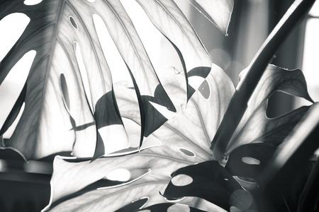 Foto de close up shot of a palm tree leaf - Imagen libre de derechos
