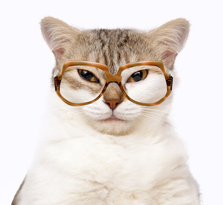 portrait of cat with glasses isolated on white