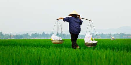 Photo pour Rice field worker - image libre de droit