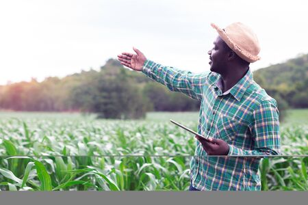 Foto de African Farmer stand in the green farm with holding tablet - Imagen libre de derechos