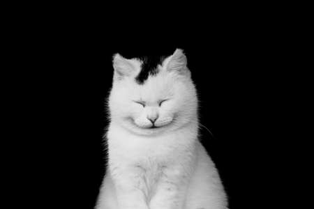 White cat smiling