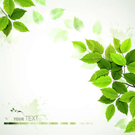 Illustration pour branch with fresh green leaves  - image libre de droit