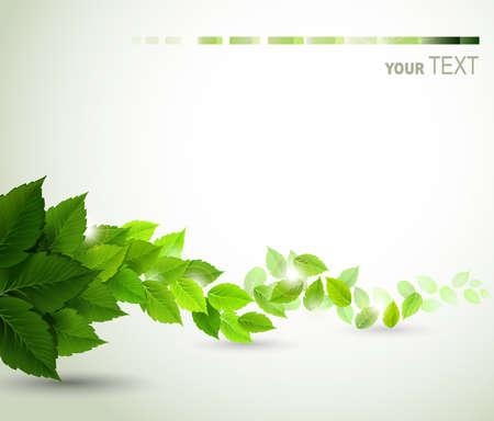 Illustration pour branch with fresh green leaves - image libre de droit