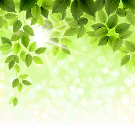 Illustration pour Summer branch with fresh green leaves  - image libre de droit