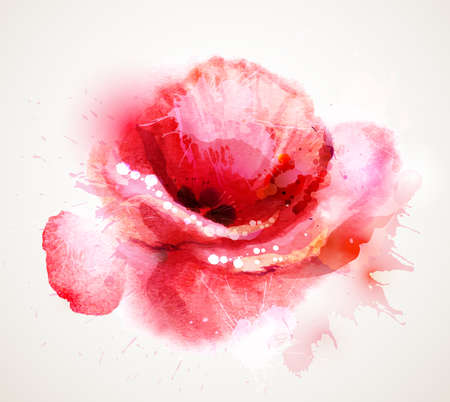 Illustration pour The flowering red poppy  - image libre de droit