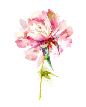 Illustration for The single flowering pink peony - Royalty Free Image