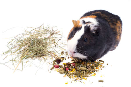 Photo for Food for domestic guinea pigs - Royalty Free Image