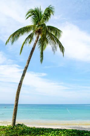 Photo for One palm tree on the shore - Royalty Free Image