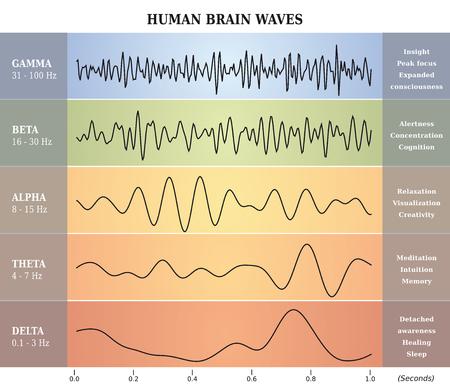 Ilustración de Human Brain Waves Diagram / Chart / Illustration en français - Imagen libre de derechos