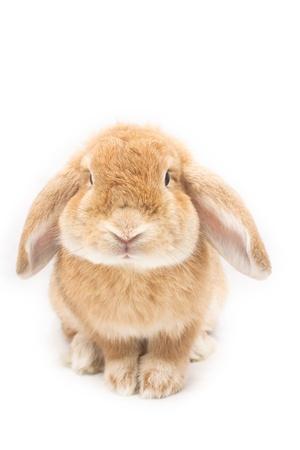 Cute rabbit on white background