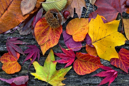 Foto de Abstract background of autumn leaves. Autumn background. - Imagen libre de derechos