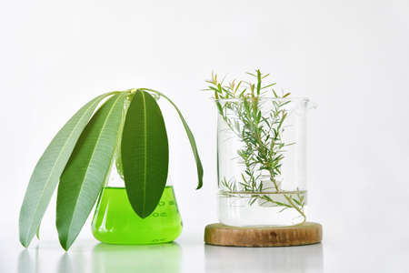 Foto de Natural organic botany and scientific glassware, Alternative herb medicine, Natural skin care beauty products, Research and development concept. - Imagen libre de derechos