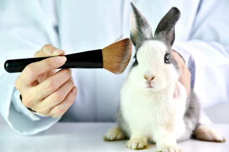Foto de Cosmetics test on rabbit animal, Scientist or pharmacist do research chemical ingredients test on animal in laboratory, Cruelty free and stop animal abuse concept. - Imagen libre de derechos